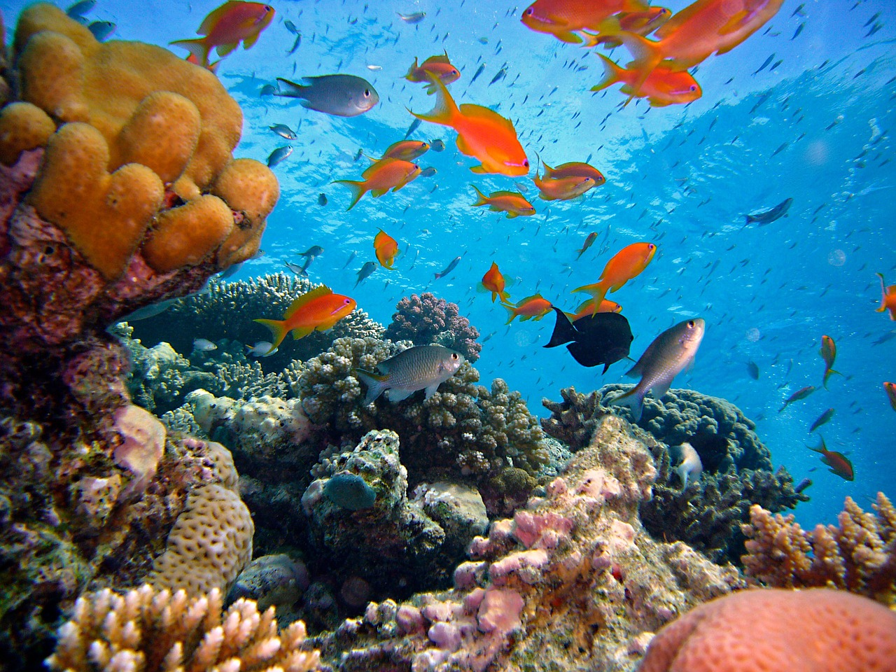 Amed Beach - Snorkeling Tour