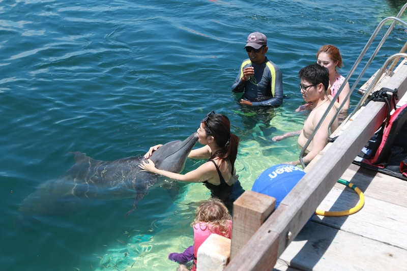 Dolpin  Swimming